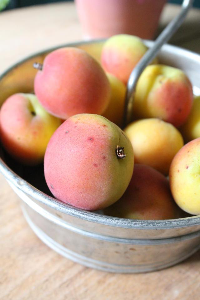 Aprikosen_Marmelade_Zitronenmelisse