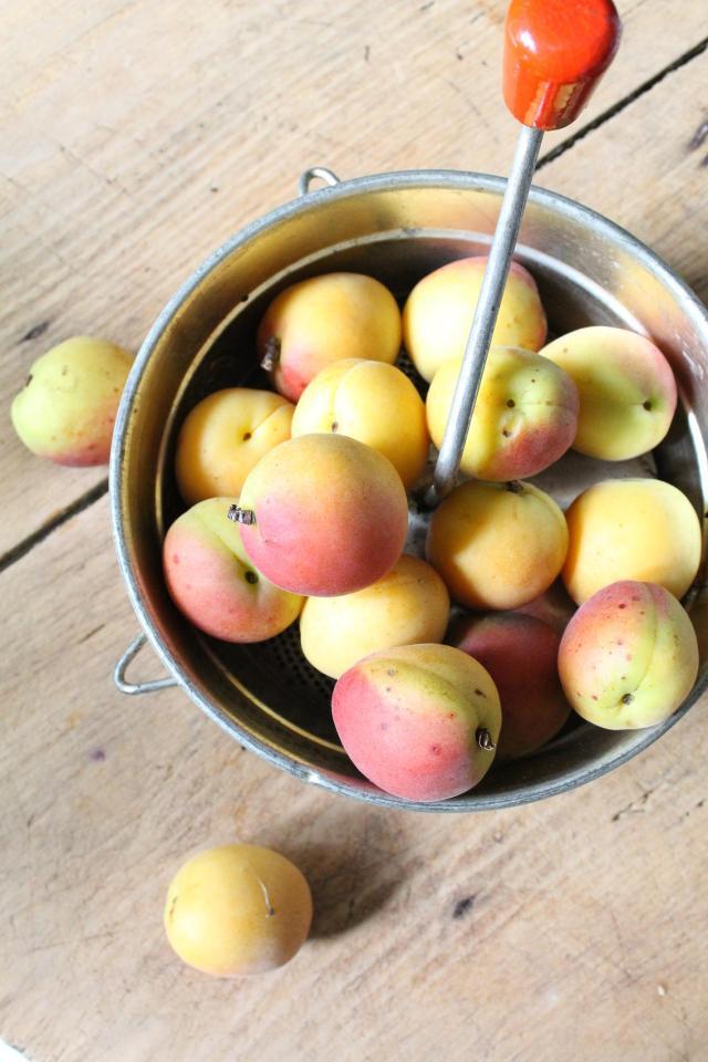 Aprikosen_Marmelade_Zitronenmelisse_1